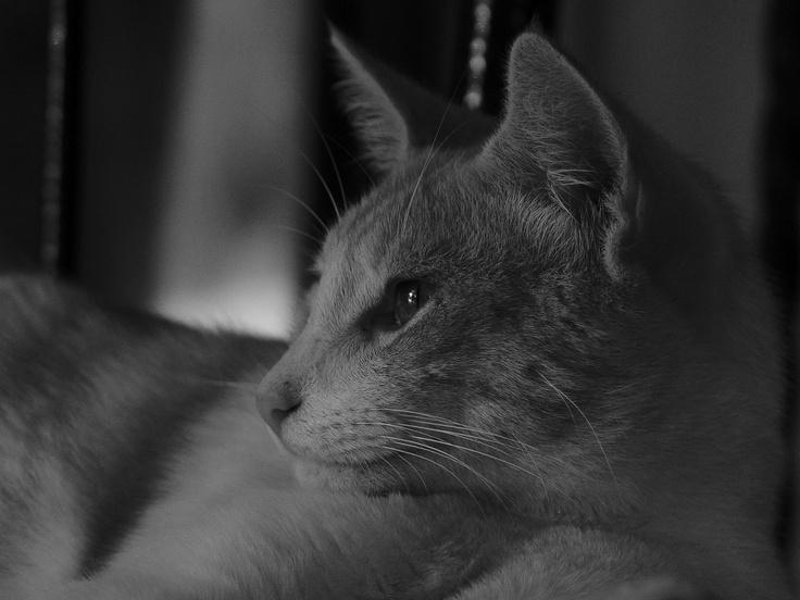 Gato B.