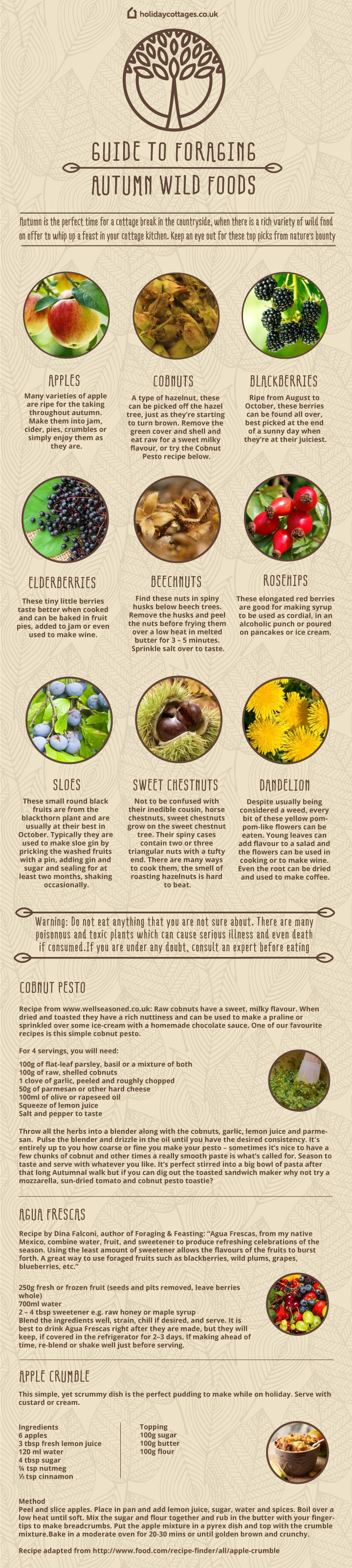 Autumn is a prime time for foraging wild foods! Click through for more detailed info.
