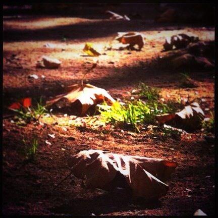 #hojas de #otoño  Iphone 4S MMM
