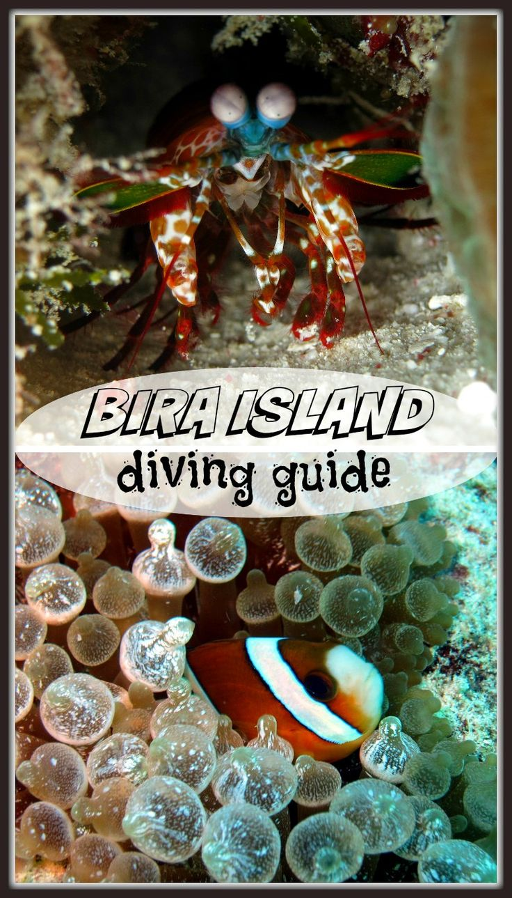 Complete guide to dive Bira island, South Sulawesi, Indonesia