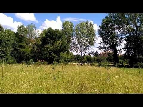Parco Il Pratone Ovest – Il frutteto – San Donato Milanese – Nicola Noe