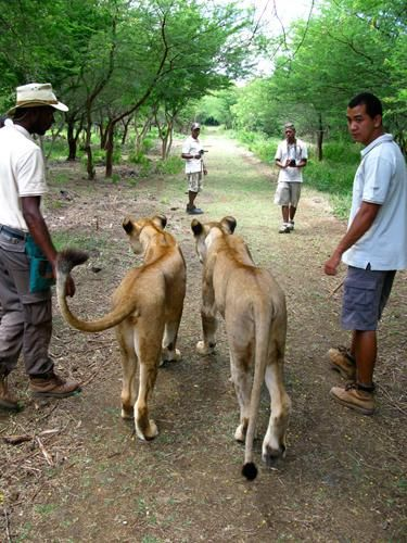 image-mauritius-2-lion-walk-at-casela-nature-park