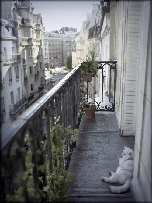 25 unique paris balcony ideas on pinterest hotels with for The balcony book