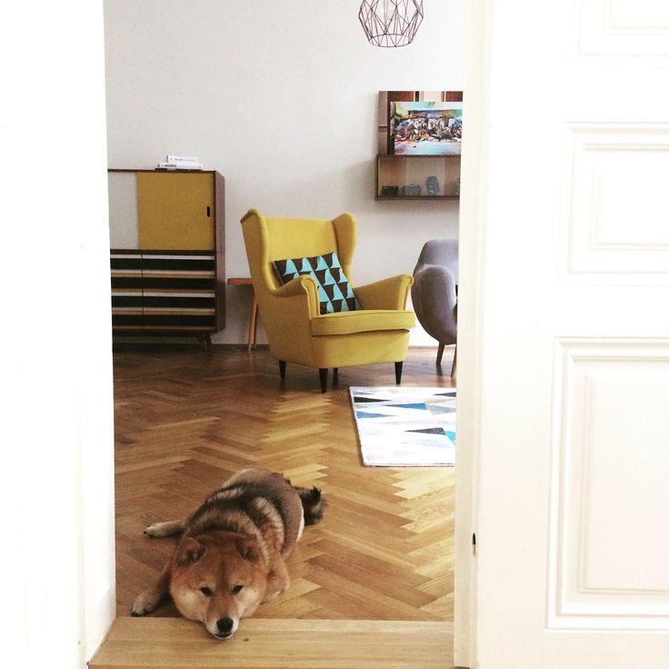 dogs carpet #livingroom #carpets #cute #homedecor #homedesign #wood #furniture #yellow #retrodesign #retroandmodern