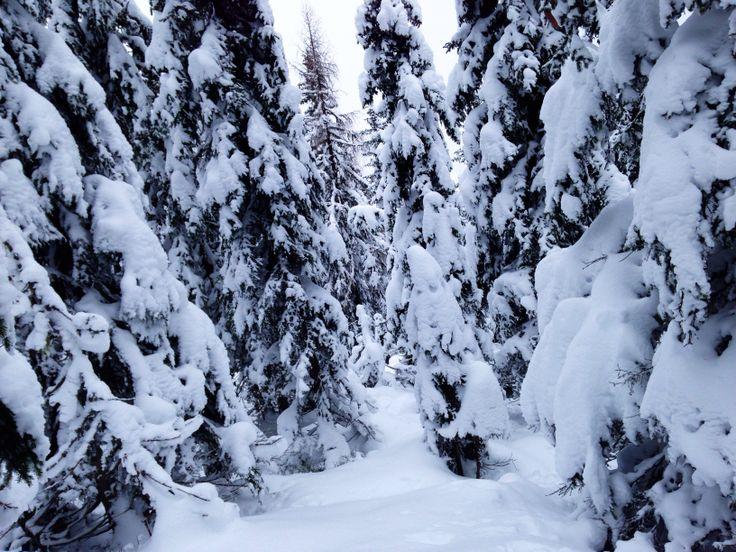 Fresh snow in Schladming. Snowboarding...