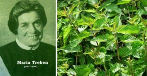 """""""Dacă oamenii ar ști ce efect Tămăduitor are Urzica, n-ar mai cultiva decât urzici!"""" Maria Treben"""