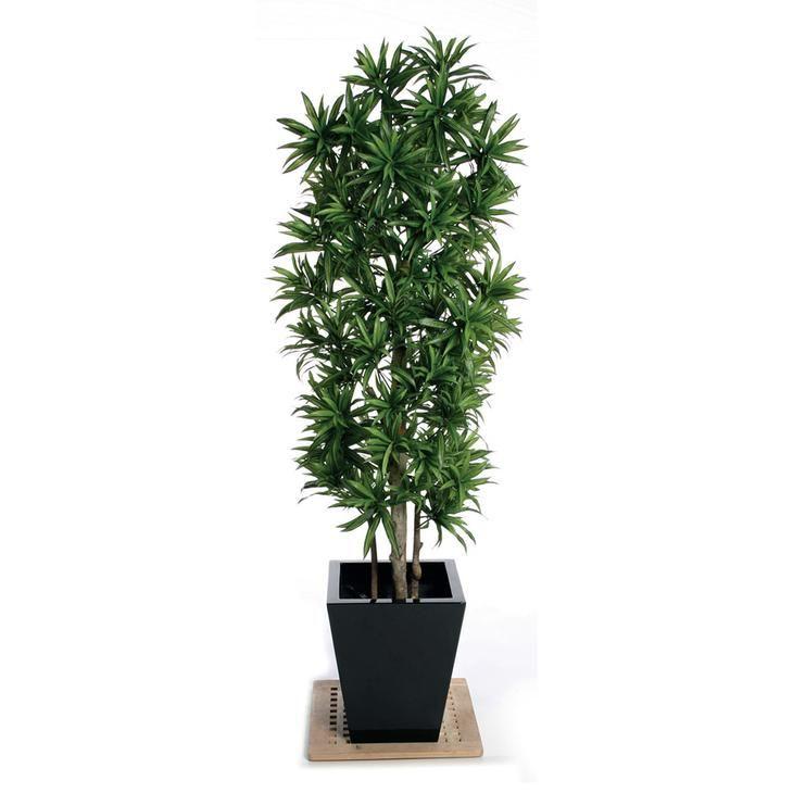 Высокие комнатные растения фото и названия