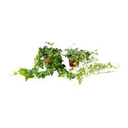Plantas, vasos e floreiras