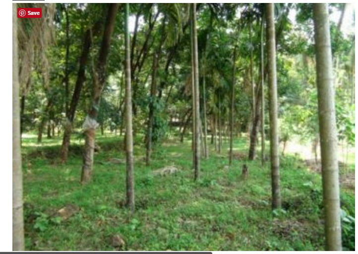 The best deal..! 1.50 acres of land sale in pukattupady. Expected price 1.35 lakh per cent. The property is just 5 km away from rajagiri hospital and 700mtrs away from MES industrial area. Facing to east and the land has good frontage suitable for Construction works.. contact us http://www.kmhp.in/properties/plot-sale-pukattupady/ #realestatedealers #propertiesforsale
