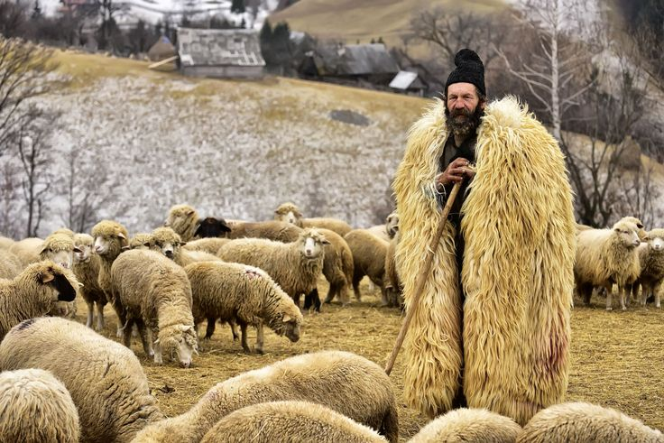 A shepherd pauses with his flock in Transylvania in this National Geographic Your Shot Photo of the Day.