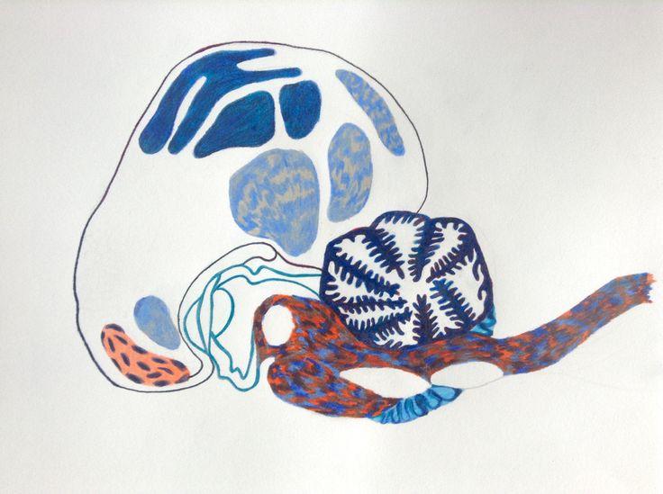 MILLE MONDES / Un frère Marin   Cerveau du dauphin  © Nolwenn Rouchet