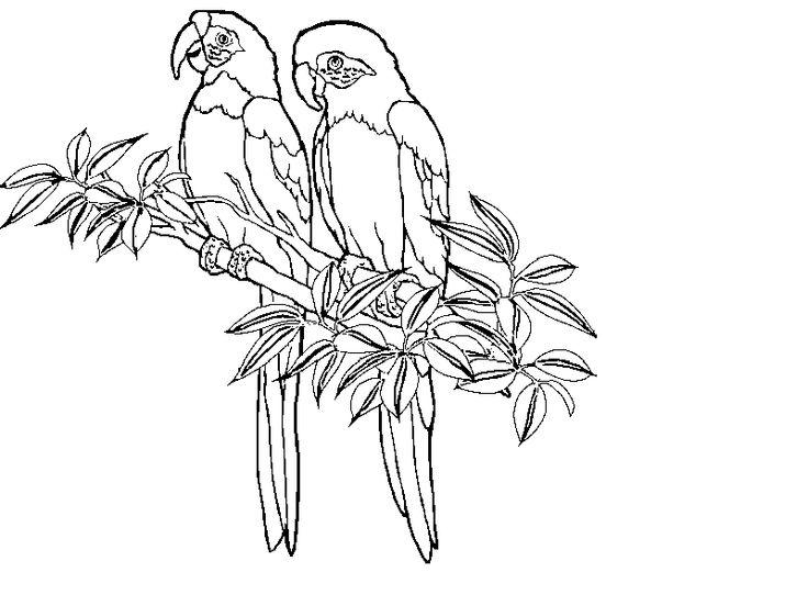 tropical bird coloring pages rainforest coloring printouts