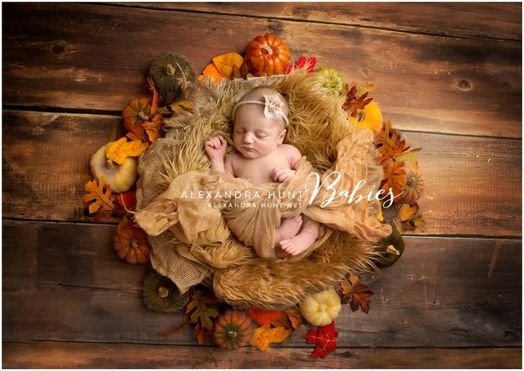 Happy Thanksgiving from Alexandra Hunt Photography! fall newborn baby pumpkin thanksgiving www.alexandrahunt.net