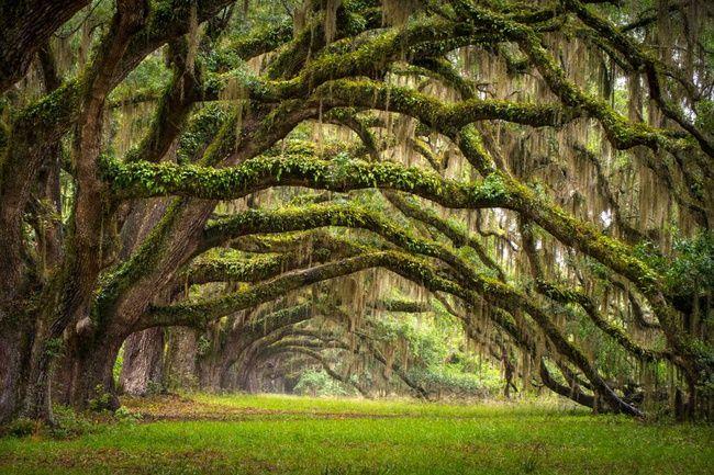 Charleston, South Carolina: Oaks Avenue.