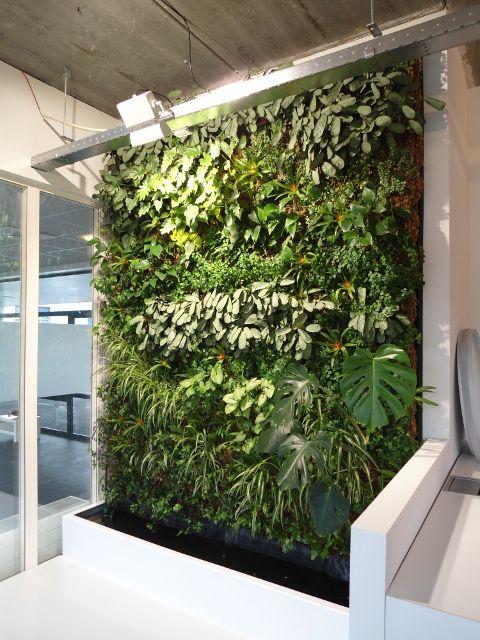 Green Wall Vertical garden mur végétal