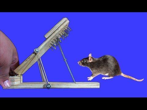 Las 25 mejores ideas sobre trampa para ratas en pinterest disfraz de los tres ratones ciegos - Como hacer una trampa para ratas ...