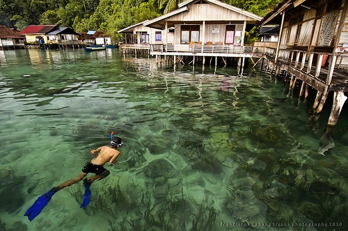 Come Out And Swim - Seram island, Maluku