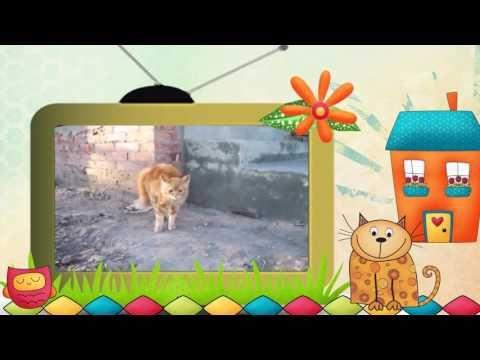 """#Видео #клип #Коты и ... другие. Серия 11. #Видеоклип """"Коты и другие.... """""""