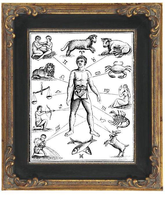 Zodiac Man Art Print 8 x 10  Medical Astrology  by fringepop, $10.00