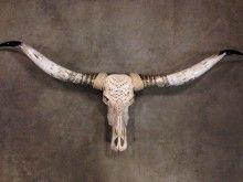 Gegraveerde Longhorn XL met gepolijste hoorns: een forse eyecatcher  ca.160 cm (nr1)