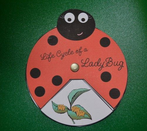 Cute ladybug life cycle wheel