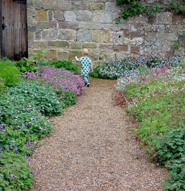 One year old running through a walled garden. Gravel path and pink Geranium.