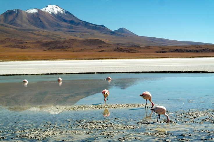 Altiplano lagoon, situated in an area between #Argentina, #Bolivia, #Peru and #Chile
