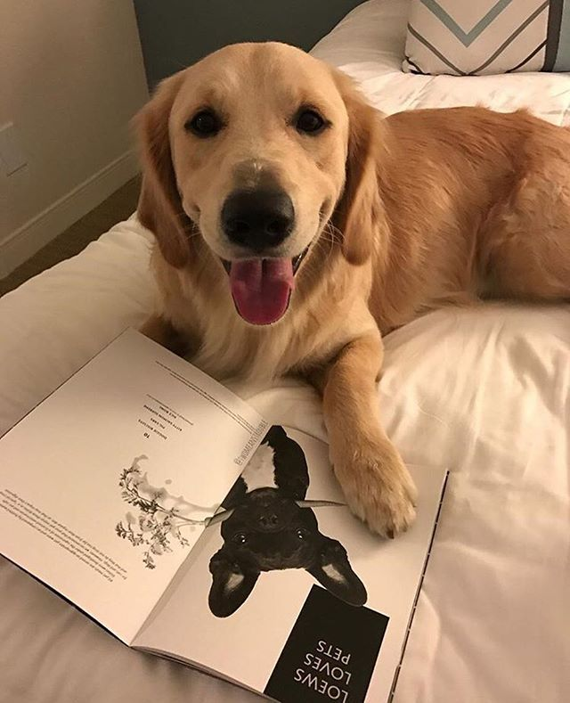 Pup friendly hotels