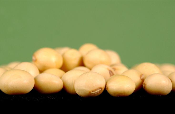 Studie ukázaly, že mnoho lidí trpí závažnými genetickými poruchami, a to díky geneticky manipulovaným organismům (zkráceně GMO). Jedná se zejména o hojně pěstovanou a oblíbenou sóju… Zejména u malých dětí se mohou vyskytnout závažné zdravotní problémy. Těm podléhají v prvé řadě děti, žijící v okolí polí geneticky manipulovaných organismů sóji – v Argentině. Testy ukázaly, …