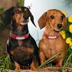 Dog Collar With Custom Name