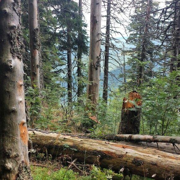 Predeal  #Romania #Carpathians mountains