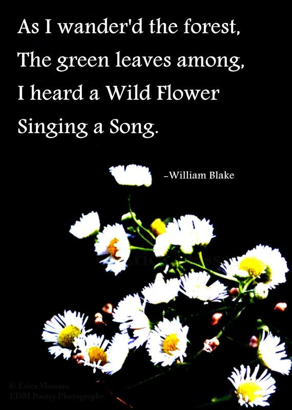 Scent of Wildflowers 4-Fine Art Photography by EDMPoetryPhotography- | Erica Massaro | Wildflowers | Flowers | White | Yellow | Green | Black | William Blake Poem | William Blake Quotes | Poetry and Prose | Inspirational Quotes and Poems | Spring | Summer | Nature | Beauty |