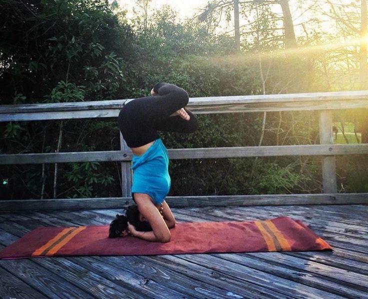 PADMASANA SIRSASANA | LOTUS POSE HEADSTAND... #Asana #Namaste #YogaPlay #Yogi #YogaChallenge #Strength #YogaFlow #PracticeAndAllIsComing #IGYoga #Yoga #Flexibility #YogaEveryday #Fitness #YogaEverywhere #Balance #YogaPractice #YogaInspiration #Practice #YogaLife #CrazySexyYoga #YogaLove #Yogini #YogaJourney #SelfTaughtYogi