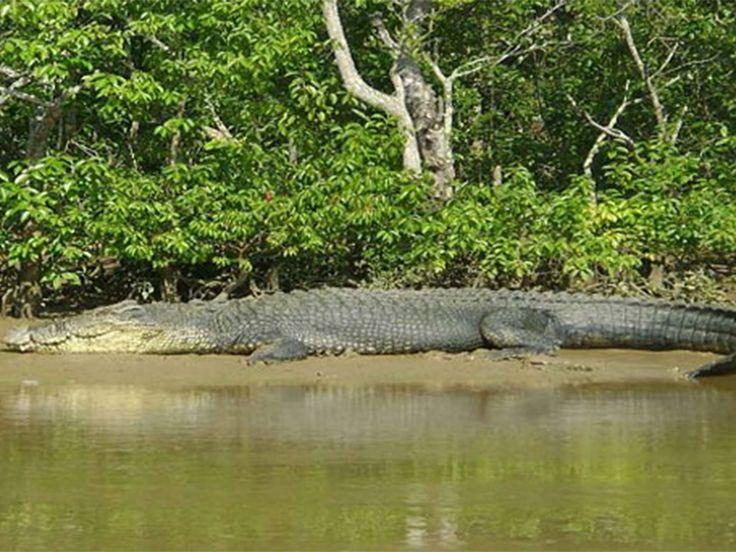 Bhitarkanika National Park - in Odisha, India