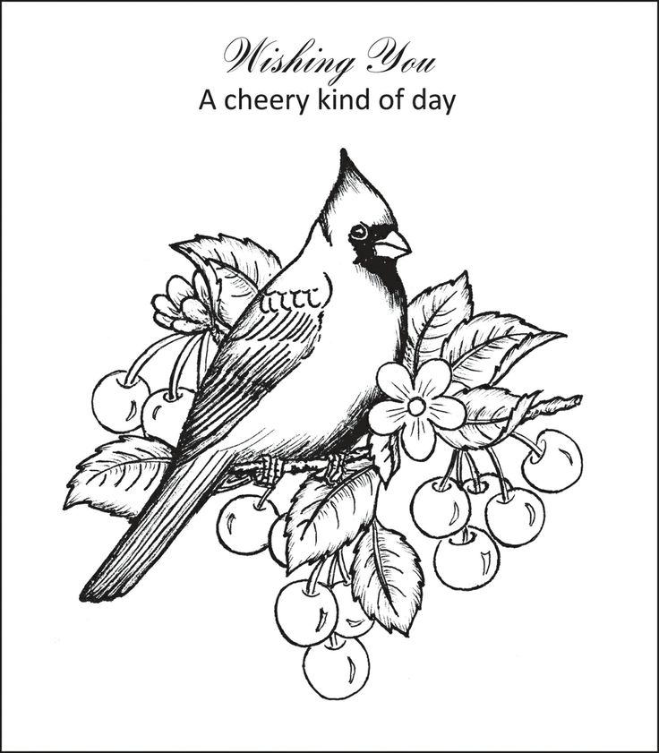 cardinal coloring pages preschool free - photo#37