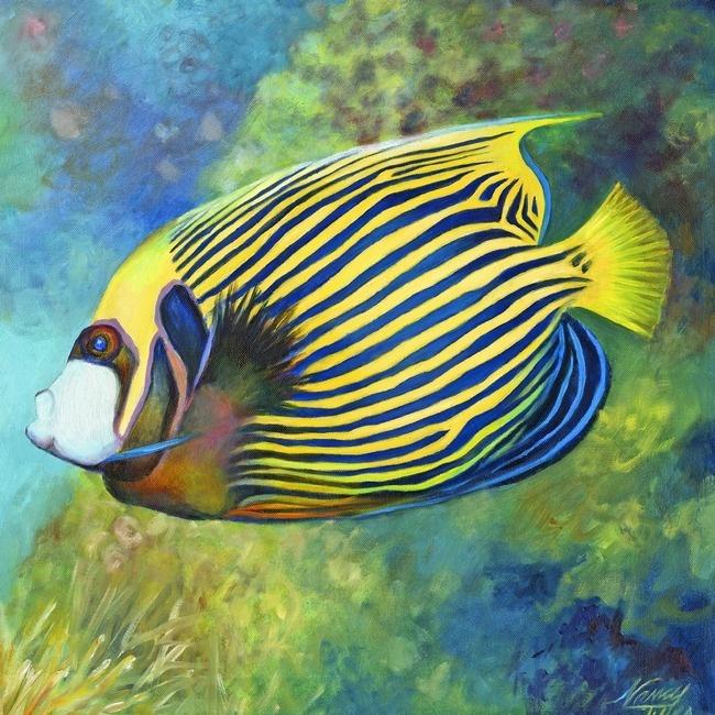 Emperor Angelfish | Nancy Tilles