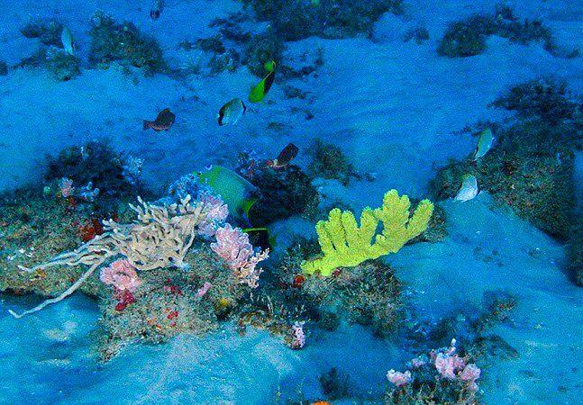 Em abril de 2016 foi anunciada a existência de um gigantesco recife de corais na foz do Rio Amazonas, onde o rio deságua no Atlântico e sua água se mistura com a água salgada do oceano entre a Guiana Francesa e o estado do Maranhão. Para se ter uma ideia do tamanho da formação, o coral possui área total de 9.500 km², o que seria equivalente a seis cidades de São Paulo. Para proteger a área, a ONG Greenpeace iniciou uma petição para que três petroleiras – a francesa Total, a brasileira…