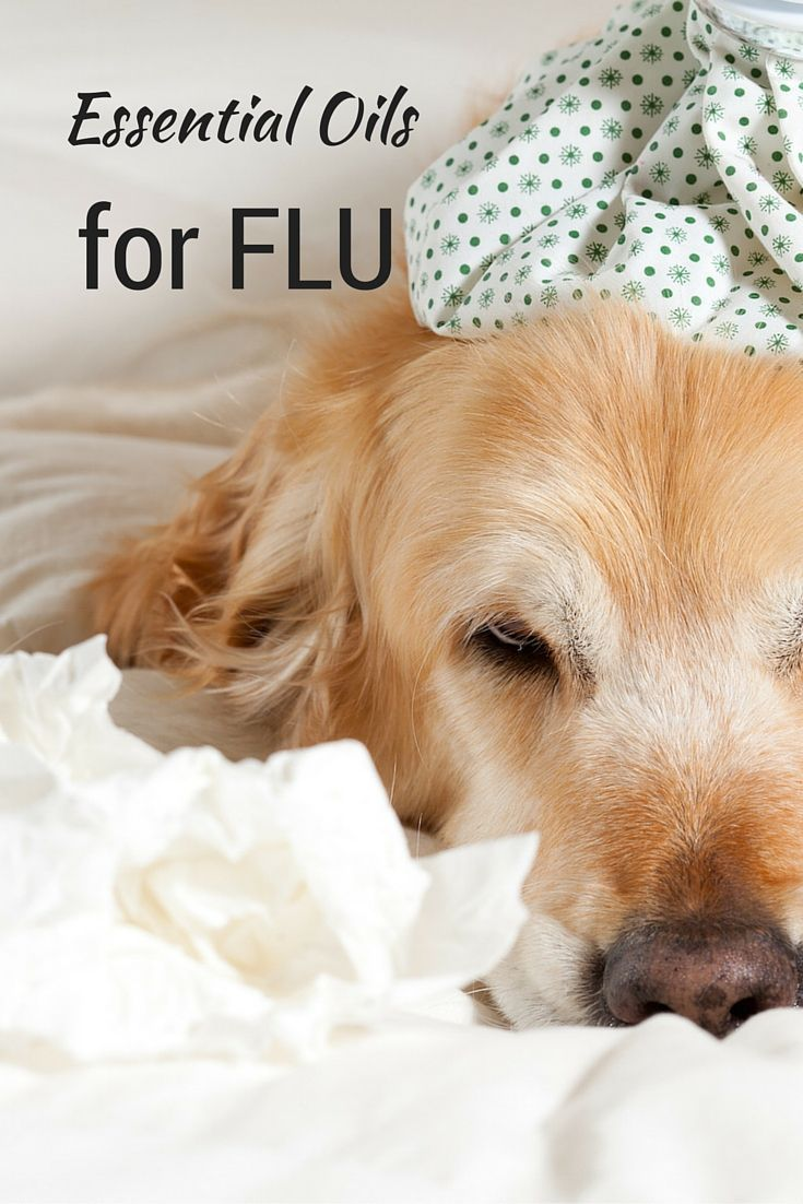 Flu, also known as respiratory influenza, is a viral infection to the lungs, nose and throat. Let's take a brief look at the relationship between diseases that are sometimes mistaken for the flu or related to the flu: Influenza A and Influenza B are viruses that attack the respiratory system. A cold is a viral …