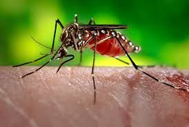Mosquito, the vector that transmits the Zika virus.The symptoms include fever, rash, joint pain, and red eyes. and there's no vaccine or specific treatment.