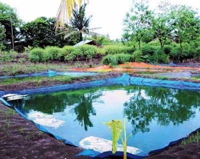 Dunia Cara Ternak Hewan - Peluang Usaha Sampingan: tips ternak ikan gurame di kolam terpal