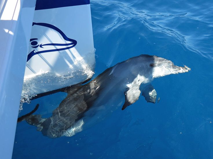 Dolphin watching with Blue Dolphin Marine Tours