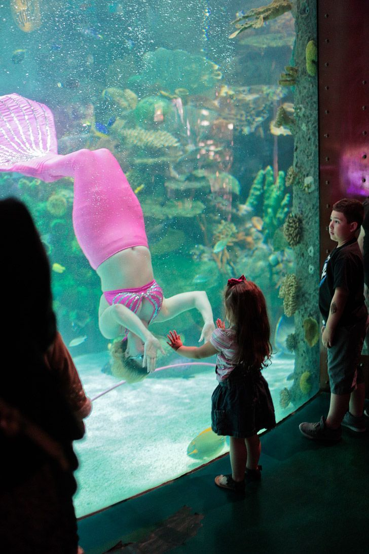Silverton Aquarium is a free attraction. Kids especially love the mermaid swims (Click through to see the other 25 Best Free Things to Do in Las Vegas) // http://localadventurer.com