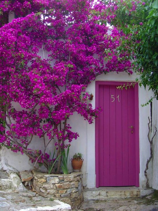 The Bougainvillea happens to be a flower that my mom loves. It is a low maintenance, easy to grow cluster flower that comes in deep pinks and purples which will brighten up any area of your garden. Poor soil? No problem, these flowers will bloom to create a spectacular bouquet, which requires very little water. …