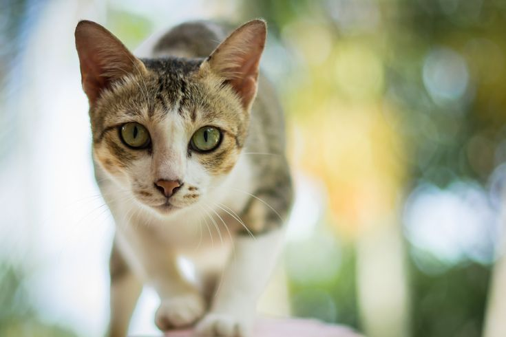 Declaw your cat many of us believe that its a harmless