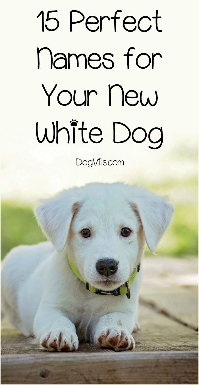 15 Perfect White Dog Names For Your New Puppy Pets Puppies Dogs