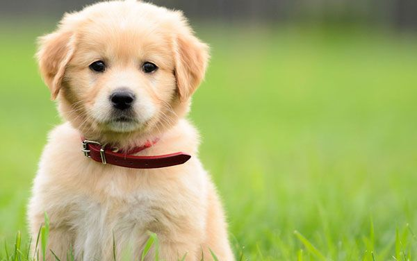 Rc Pet Products Are A Canadian Company That Manufactures Some Great Quality Dog Collars With A Very Dist Best Dog Training Calm Dogs Funny Dog Videos