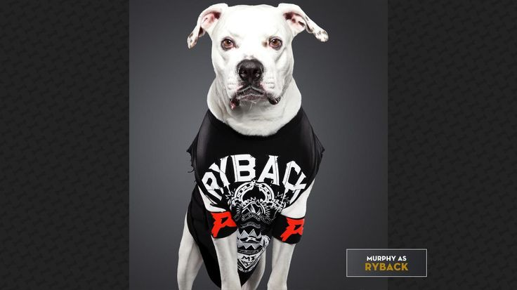 Murphy as Ryback: BaRk Me More!  Check out more: http://wwe.me/lkyaE