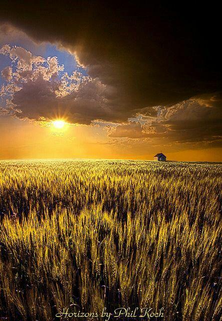 Praire Land by Phol Koch