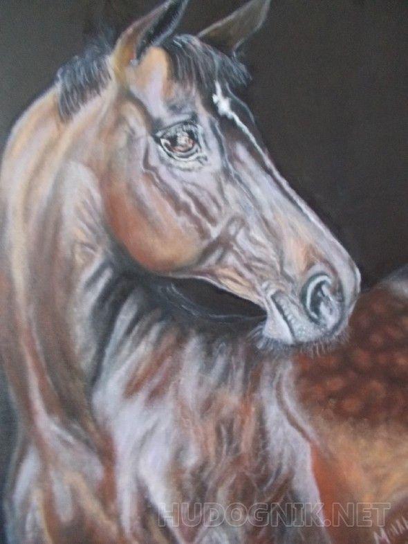 В ожидании гнедая лошадь на чёрном фоне