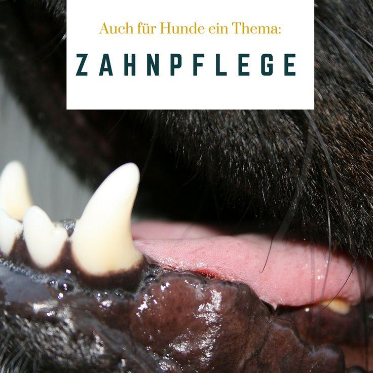 Auch die Zähne unserer Vierbeiner müssen gepflegt werden. Wie? Klick auf das Bild und Du erfährst mehr